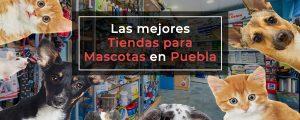 Las Mejores Tiendas para Mascotas en Puebla